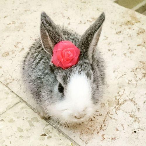 Animal Themes Rabbit ❤️ Rabbit 🐇 Rabbit - Animal Animal My Rabbit😍 EyeEm Best Shots