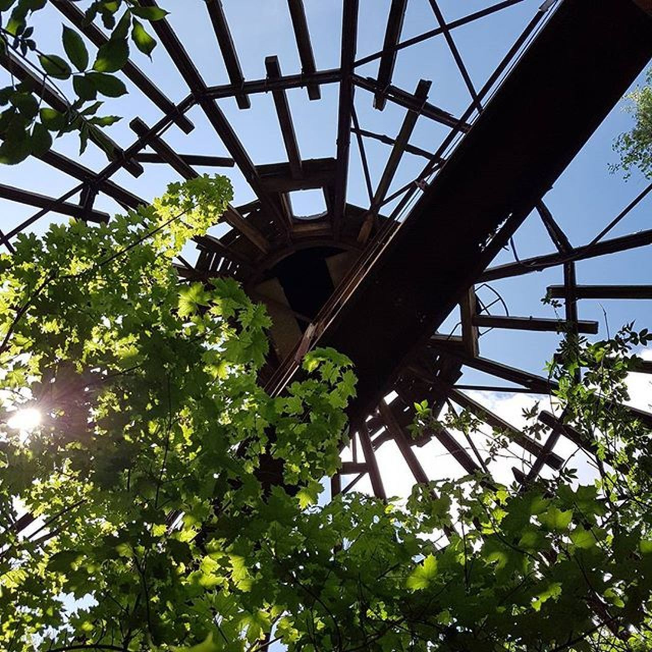 low angle view, tree, green color, outdoors, day, growth, leaf, no people, built structure, architecture, nature
