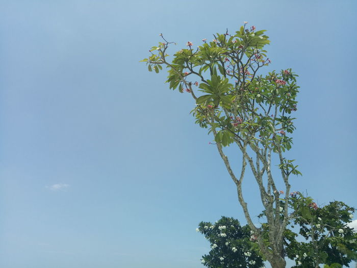 Nofilter EyeEmNewHere Natural Light Naturalcolor  Tree Flower Clear Sky Branch Blue Leaf Sky Orchard