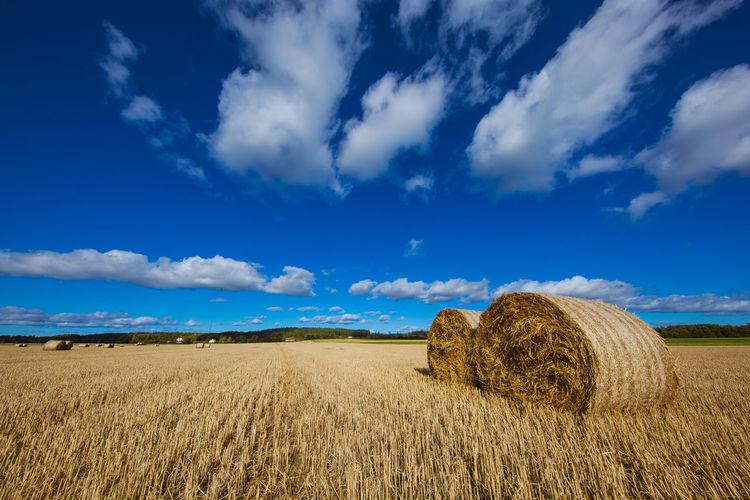 Hay bales on farm against blue sky