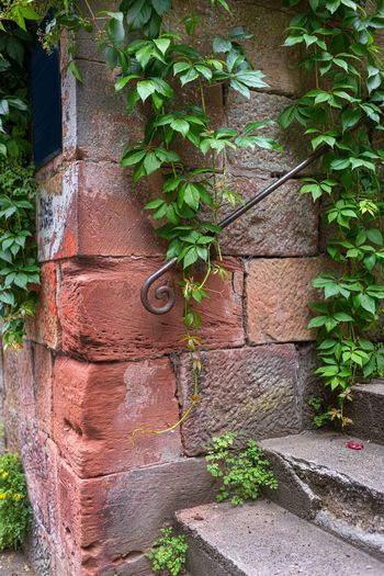 Plant Architecture Leaf Built Structure Plant Part Wall Growth Wall - Building Feature Ivy No People Green Color Brick Day Brick Wall Nature Building Exterior Creeper Plant Outdoors Building Old Sandsteinmauer Wilder Wein, Stufen Eingang