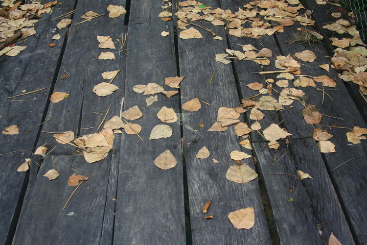 Abundance Autumn Beauty In Nature Change Close-up Day Dry Fallen Floor, Leaves, Nature, Lines, Parallel, Wood, Loneliness, Peace, Silence, Reflection High Angle View Leaf Leaves Maple Maple Leaf Nature No People Outdoors