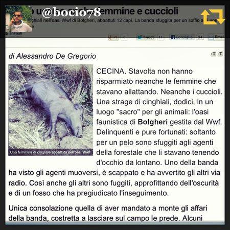 RG bocio78: #vergogna#assassini#per non dimenticare#animali#uccisi#cinghiali#a#sangue#freddo#bastardi#senza parole #regramapp A Animali Freddo Sangue Per Regramapp Cinghiali Uccisi Bastardi Vergogna Senza Assassini