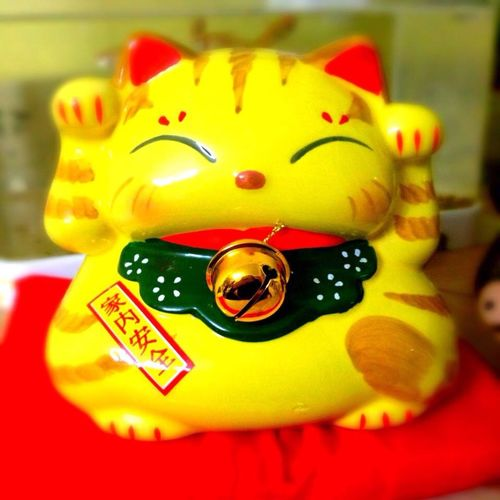 Asian  Asian Culture Cat♡ Home Taking Photos