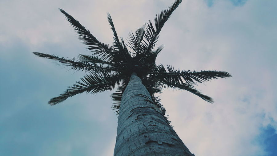 The strongest ones. Check This Out Mobilephotography PhonePhotography Teamsamsung Coconut Tree Nature Eye Em Philippines Eye Em Around The World Itsmorefuninthephilippines Eye Em Best Shots Fascinating Local Backpacking Traveljunkie Photooftheday Enjoying Life Relaxing