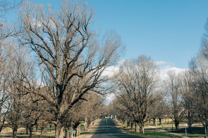 Bare trees in park against clear sky