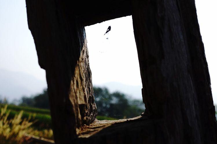 View of bird on tree trunk