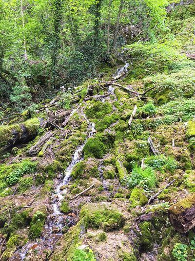 Wasserfall und