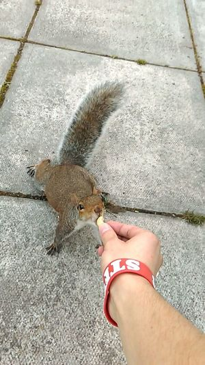 She wanted the nut this time ^^ Feeding Squirrels Feeding Animals Squirrel Cutest Squirrels Squirrel Closeup Grey Squirrel