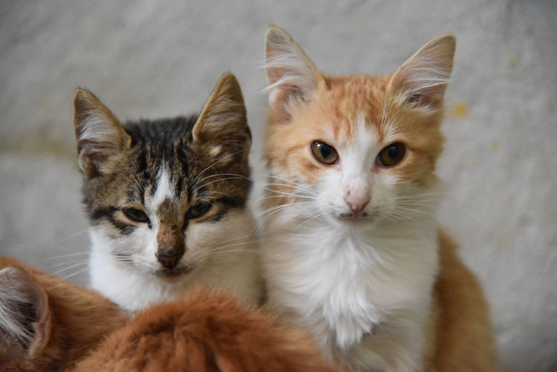 Cyprus Animal Themes Close-up Day Domestic Animals Domestic Cat Feline Focus On Foreground Ginger Cat Indoors  Katzen Kitten Looking At Camera Mammal No People Pets Portrait Togetherness Whisker Young Animal Zypern