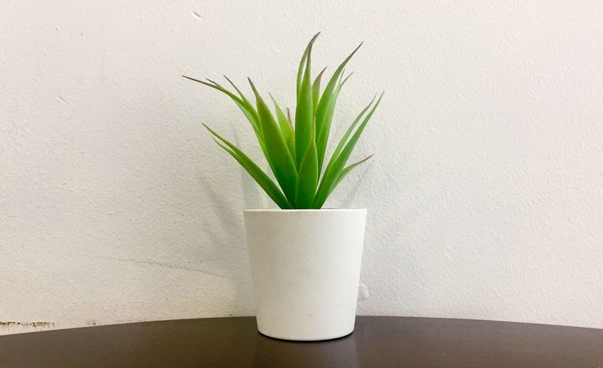 A plant Plant Wall - Building Feature Growth Nature Potted Plant No People Wall Houseplant Day White Color Freshness Leaf Indoors  Plant Part Green Color Close-up Flooring Table Flower Pot