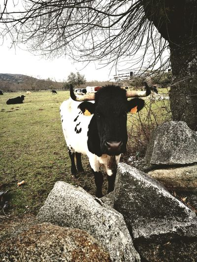 View of cow standing against plants