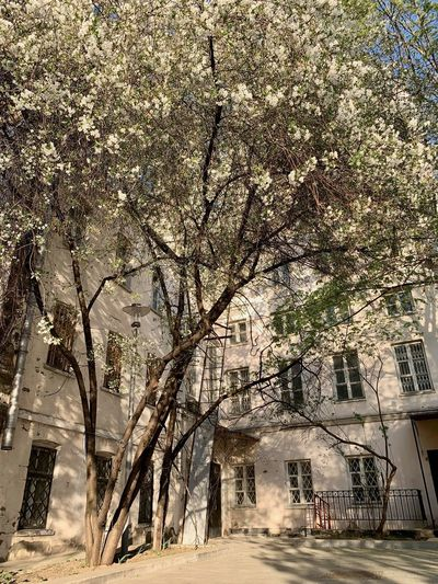 Tree Plant Architecture Building Exterior Built Structure City Growth Nature No People Branch Building Road Outdoors Street Blossom Springtime Cherry Blossom Cherry Tree Moscow Spring Flowers Springtime Decadence The Architect - 2019 EyeEm Awards The Mobile Photographer - 2019 EyeEm Awards