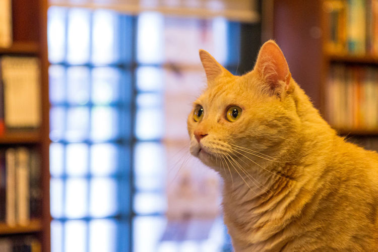 Close-up of a cat looking away in a bookstore