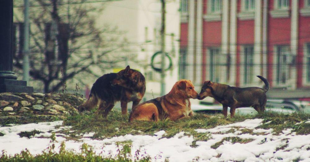 Nature Domestic Animals No People Animal Themes Pets Dog Winter Outdoors Russia россия орел450 орел Animal
