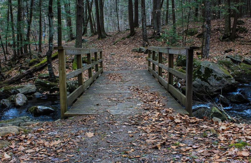 A bridge leading home Nature_perfection Naturephotography Naturelovers Nature On Your Doorstep Nature_collection Forest Collection Alone Time Granville Secluded  Bridge Bridge - Man Made Structure Pathway Path Massachusetts New England  Walk In The Woods Trail Forest Tree Nature Day The Way Forward Tranquility Land No People Built Structure Beauty In Nature Footbridge Architecture Tranquil Scene