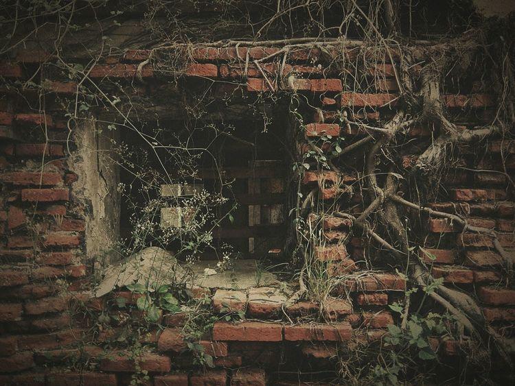 何処ヘ行ってもついつい 壁萌 に走ってしまう(¯―¯٥)… Old Town Wall Wall And Window Brick Wall Red Brick Red Brick Wall Street Photography Streetphotography Streetphoto_color Melancholic Landscapes Ruined Wall Eye4photography  Light And Shadow 2016.01.09 at 安平老街 in Tainan, Taiwan