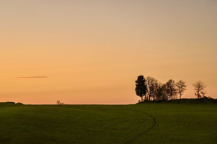 Trees on field against clear sky during sunset