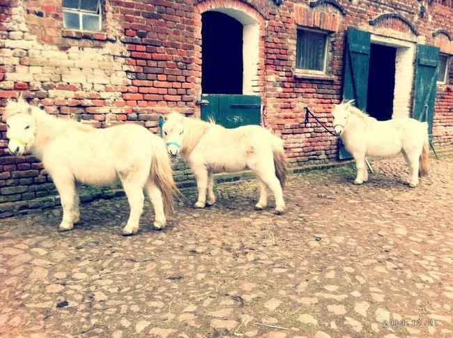 little ones Horses
