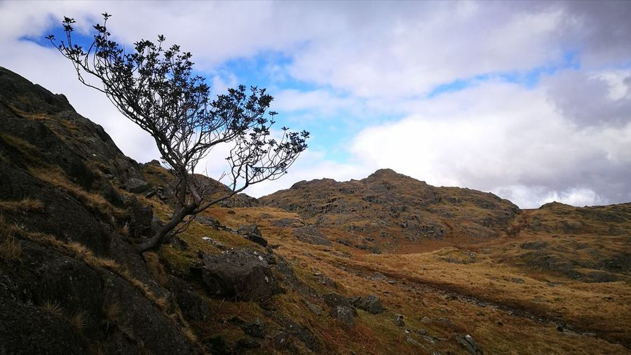Clinging Tree Heading For The Pikes Rocks An Boulders Everywhere lol No People Outdoors Mountain Range Scenics Beauty In Nature Lakeland Cumbrian Fells
