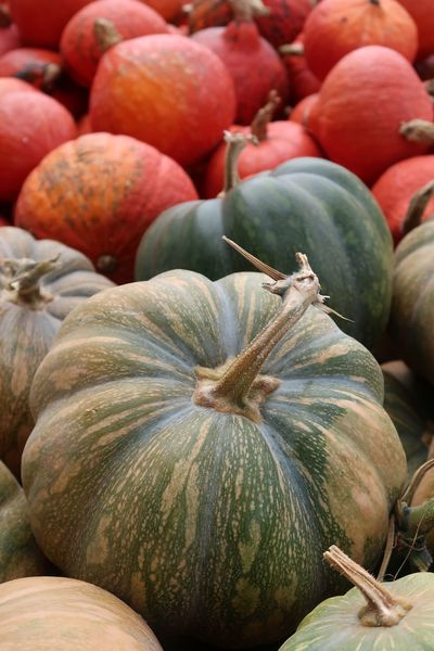 Pumpkin Kürbis Halloween Food And Drink Food Freshness Healthy Eating Wellbeing Market Abundance Fruit Close-up Day Retail  Market Stall Backgrounds Still Life For Sale Full Frame No People Large Group Of Objects Vegetable Business