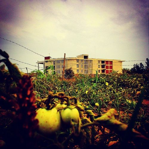 A perfect snap! ByZenFone5 ArchitectureCollege TomatoesRipe Evening