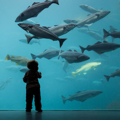 Rear view of boy standing by fish swimming in aquarium