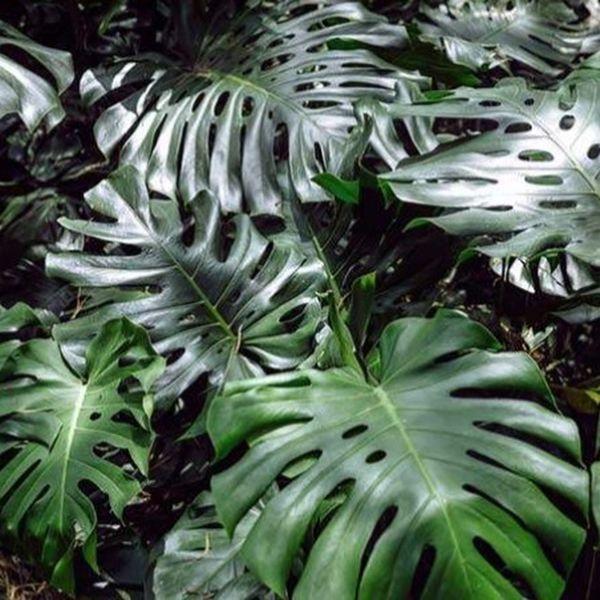 Botany Autuman D A y