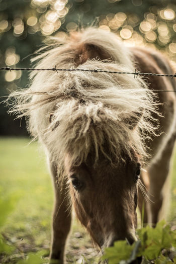 Pony grazing on field by barbed wire