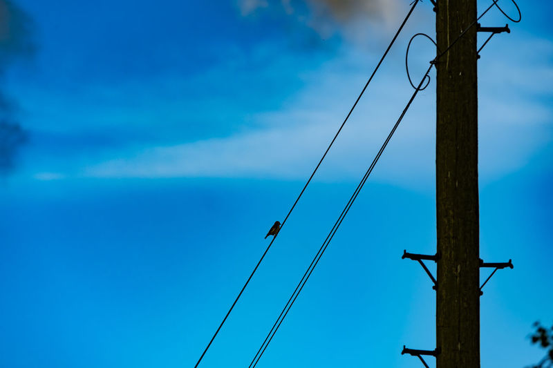 Telegraph pole with bird on a wire. Nature Animal Themes Animals In The Wild Bird Blue Cable Connection Day Electricity  Flight Low Angle View Nature No People Outdoors Power Supply Sky Telegraph Pole Telephone Line Wires