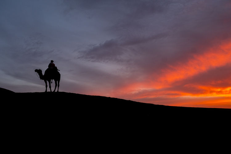 Camel Trader during sunset in Thar Desert, Jaisalmer, India. Beauty In Nature Cloud - Sky Cowboy Domestic Domestic Animals Horse Horseback Riding Land Mammal Men Nature One Animal One Person Ride Riding Silhouette Sky Sunset