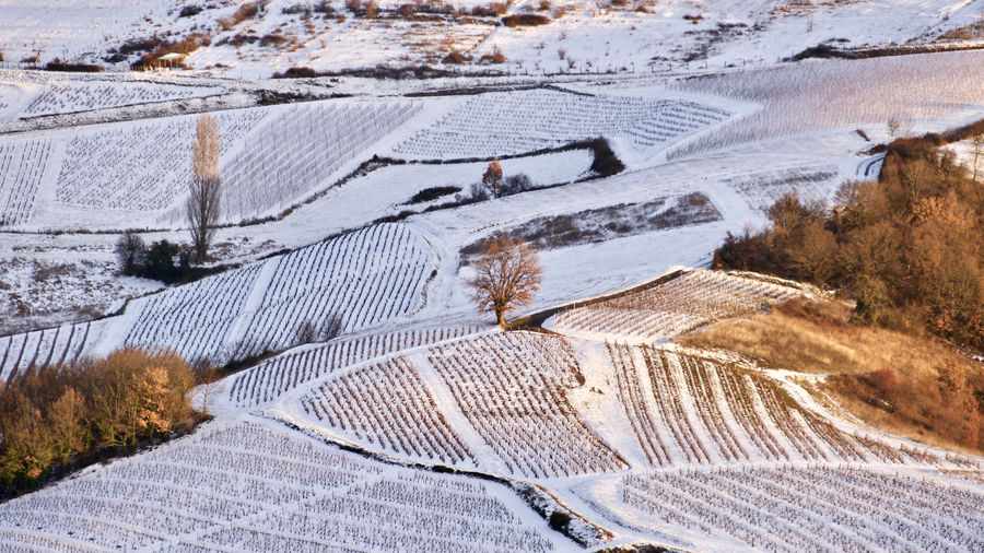 High angle view of snow covered agricultural landscape