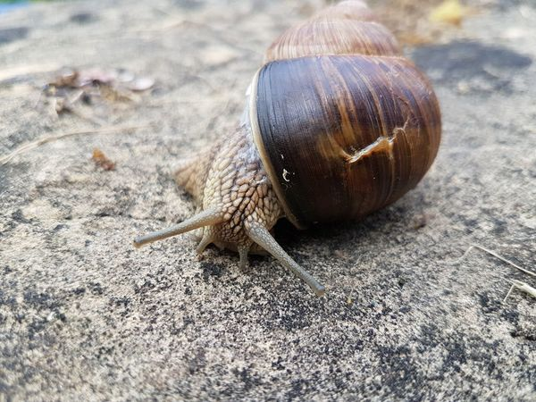 snail Street Outside Photography EyeEm Selects Close-up Snail Slow