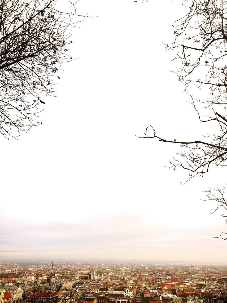 bare tree, tree, branch, nature, no people, outdoors, city, sky, clear sky, building exterior, architecture, beauty in nature, cityscape, day
