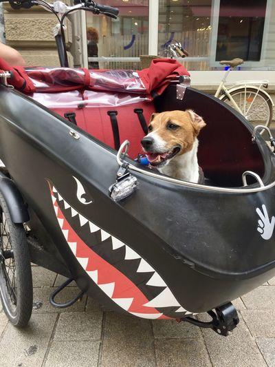Dog sitting in car