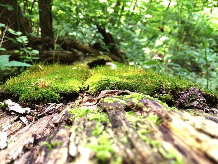 How doth the green moss grow... First Eyeem Photo