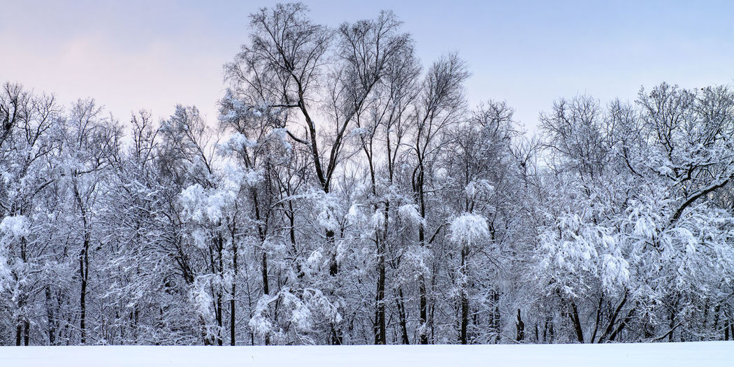 Bare trees on snow covered land against sky