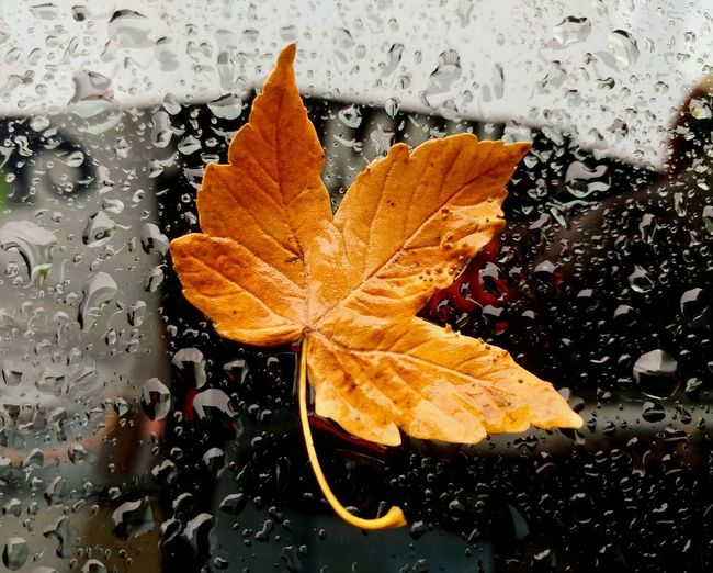 A beautiful background for a beautiful autumn leaf. Crisp Beauty In Ordinary Things Autumn Winter Beauty In Nature Beauty In Decay Italy Discovery Close-up Drops Water Glass Drops Of Water Beautiful Brown Perfect