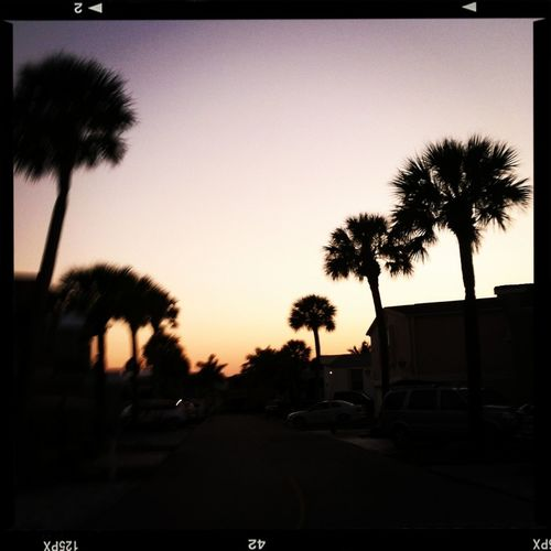 Not The Best Sunset But I Love The Palms In The Picture