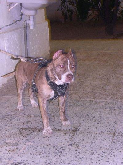 Dogs Haw Ilfeda Chta3mel