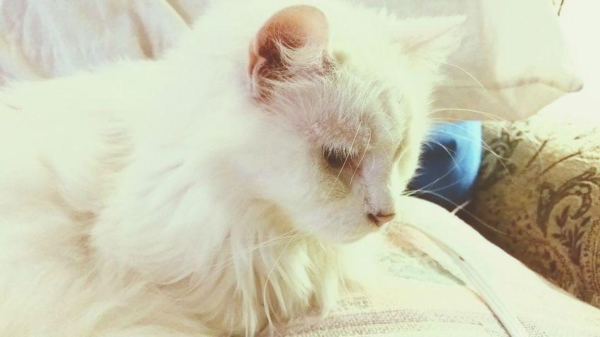 Showcasejuly2016 Relaxing Cat Photography Pets Photography Pets Corner EyeEmbestshots Thisweekoneyeem Catslife Catslovers Catstar #cat #catnap #catoftheday #catpic #catlovers #catsconnect #catinstagram #catsofinstagram #gato #gatinhos #gatto #garfield #petstagram #premierpet #photooftheday #petsofinstagram #picoftheday #petlovers #instabicho #ilovecats #ilovemypet #issovici Catsoneyeem Cats Lovers  Catsoftheworld Showcase July 2016