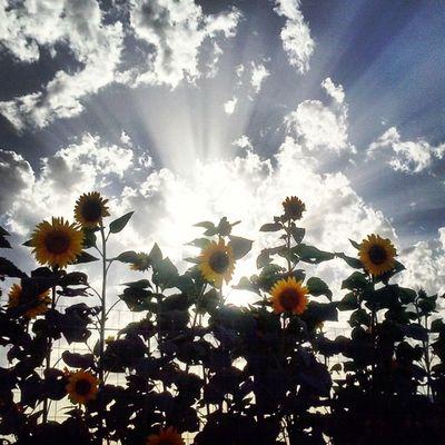 Flower Italy Campania Scafati Sun Sunrise