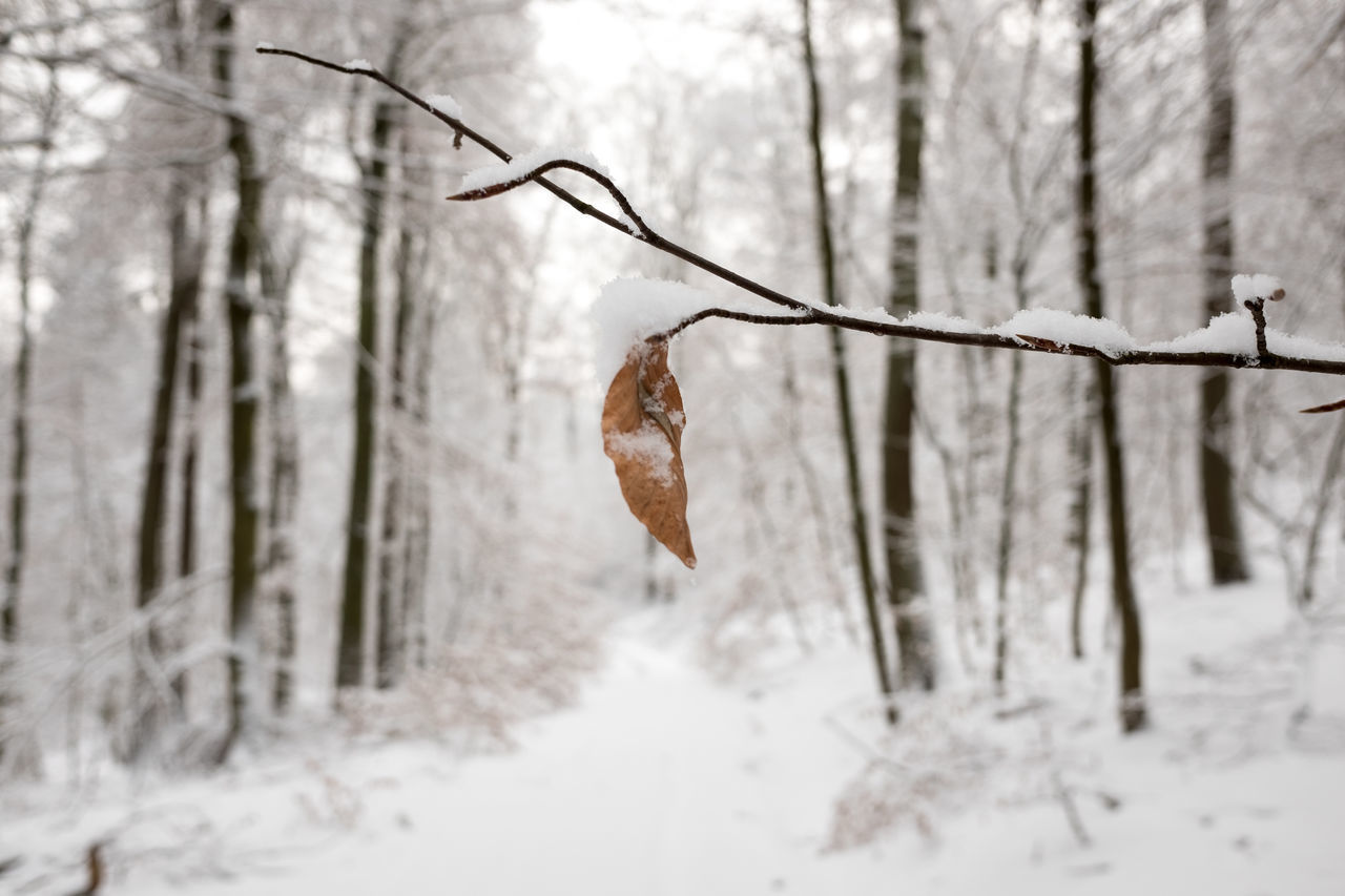 cold temperature, winter, snow, weather, nature, dry, focus on foreground, no people, frozen, day, tree, beauty in nature, hanging, dried plant, outdoors, close-up, bare tree