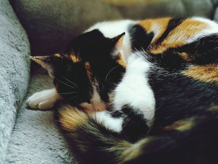 EyeEm Selects Pets One Animal Animal Themes Domestic Animals Indoors  Mammal Close-up No People Day Nature