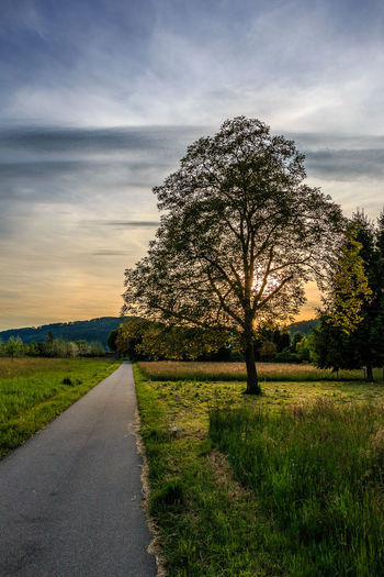 Sonnenuntergang hinter dem Baum Bare Tree Beauty In Nature Blue Sky Cloud Cloud - Sky Country Road Countryside Field Grass Grassy Green Color Idyllic Landscape Nature Sky Sunset Tranquil Scene Tranquility Tree Tree
