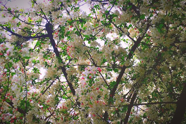 Spring Tree Flower Beauty In Nature Blossom Fragility Pink Color Springtime No People Freshness