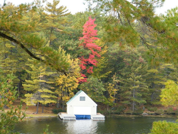 Seasons end Fall Colors Beauty In Nature Boat House Lake Tranquil Scene Tranquility Tree Water Waterfront