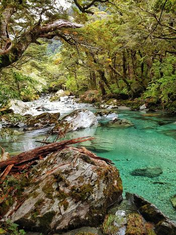 The Great Outdoors - 2016 EyeEm Awards River Clear Water Water Travel Routeburn Track New Zealand Nature Pristine Trees Hiking