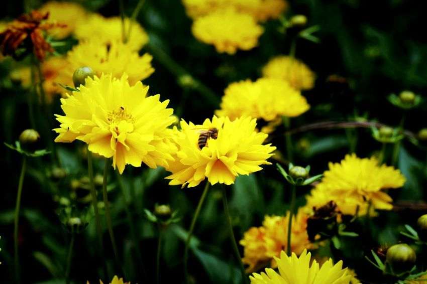Amazing workers.... Bee Yellow Flowers Nature Amazing Nature Nature Working Green And Yellow