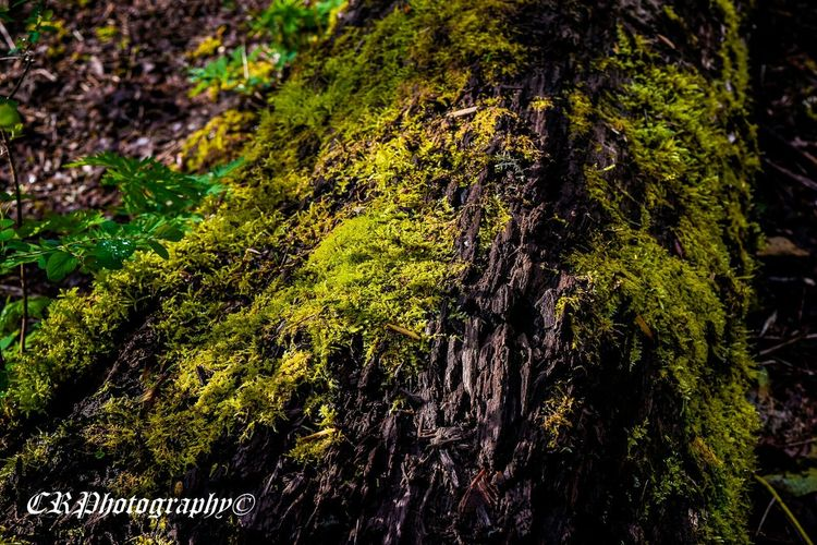 Moss Hrd Hrd_collection Trees Walkintheforest Taking Photos EyeEm Nature Lover Greenery